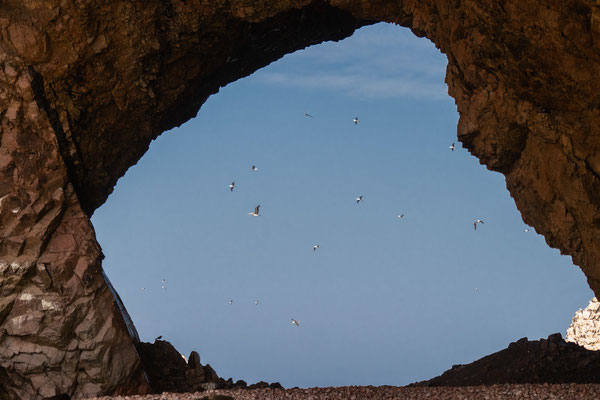 5. Nov.   Islas Ballestas