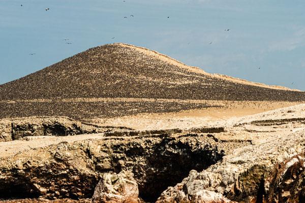 5. Nov.   Islas Ballestas: Kormorankolonie