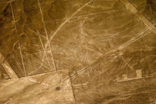6. Nov.   Nazcalinien: Colibri