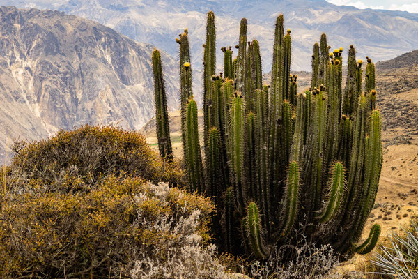 10. Nov.   Colca-Canyon