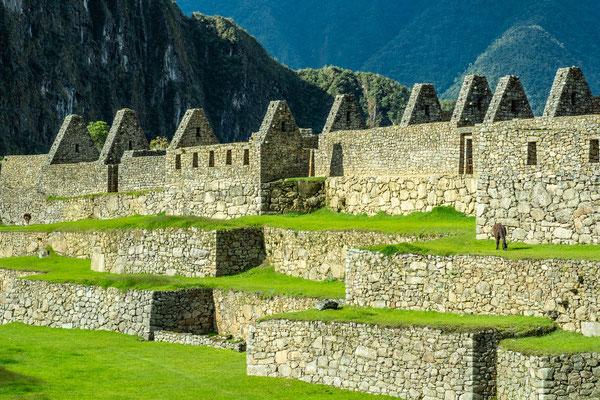 Machu Picchu, Nov. 2019