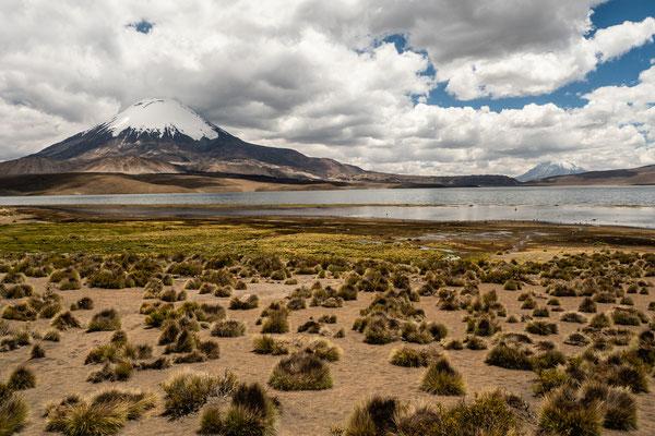 20. Nov.   Lauca NP: Lago Chungarra