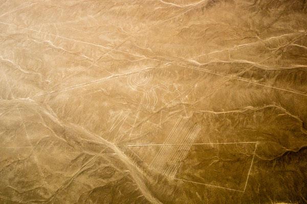 6. Nov.   Nazcalinien: Mono (Affe)