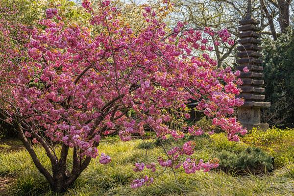 Japangarten, Karlsruhe, Apr. 2019