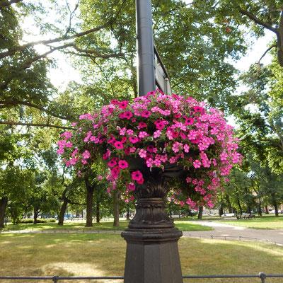 Blumenschmuck vor dem Russischen Museum