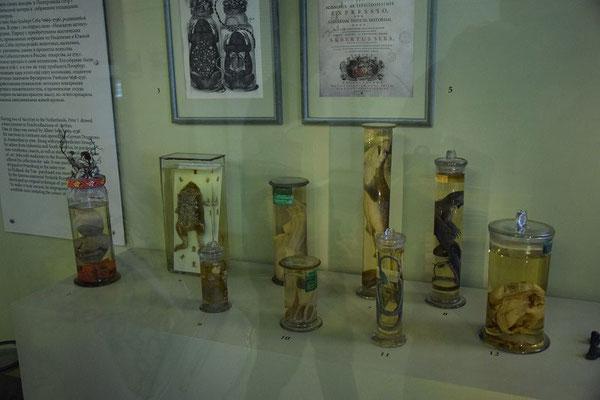 wissenschaftliche Ausstellungsstücke von Peter dem Großen
