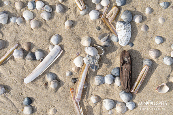 Schelpen in de zand