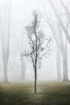 Sichtbar im Nebel