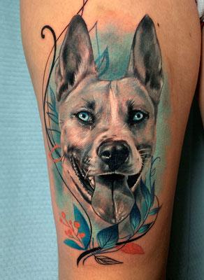 retrato perro grises