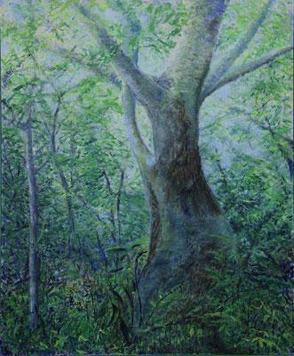 19 会友  新井 かつよ 神宮の森の樹 F100 油彩