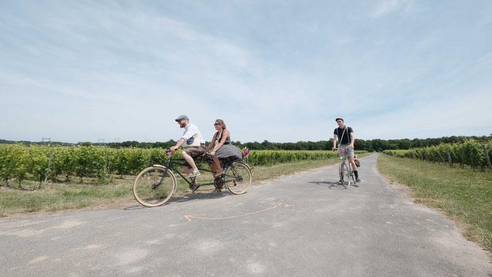 Anjou Vélo Vintage Stephane Moreau Photographe
