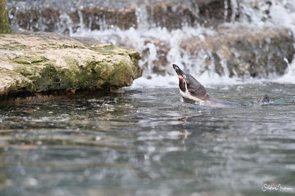 Stephane Moreau Photographe - Bioparc Doue la fontaine - Anjou - Maine et Loire