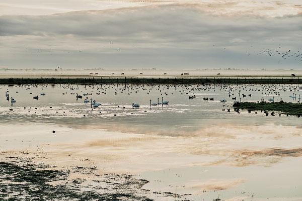 Réserve Saint Denis du Payré-Vendée- ©Stéphane Moreau