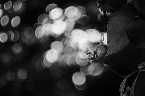Stéphane Moreau Photographe Chalonnes sur Loire - Terra Botanica - Fujifilm - Revuenon