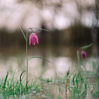 © Stephane Moreau Photographe