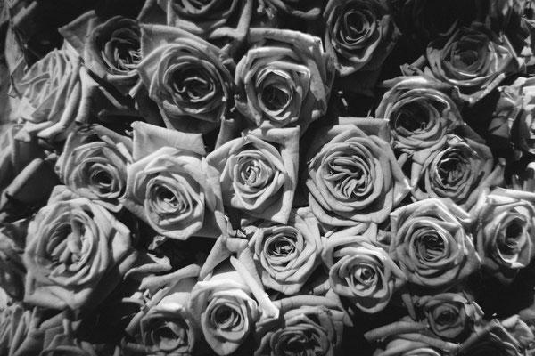 Stephane Moreau Photographe - Les journées de la Rose - Doué la Fontaine