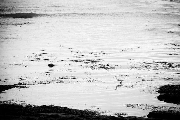 La bretagne par Stéphane Moreau Photographe - Fujifilm//Fuji