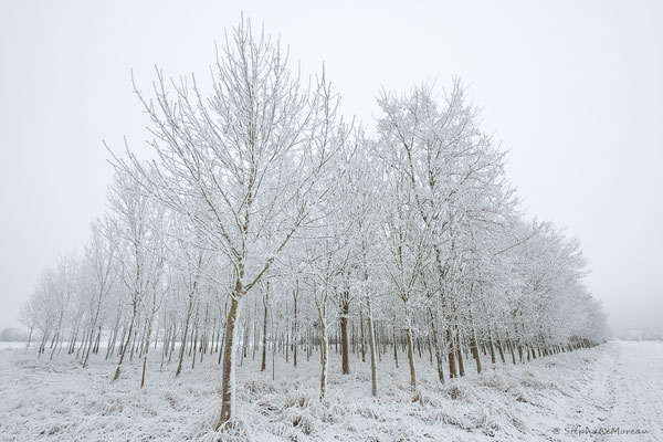 stephane moreau photographe fujifilm chalonnes loire