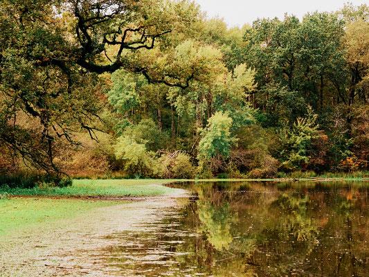 Stephane Moreau Photographe - Le Parc du Martreil - Anjou