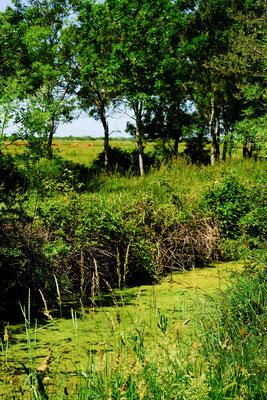 le Marais de Voutron - Stephane Moreau Photographe