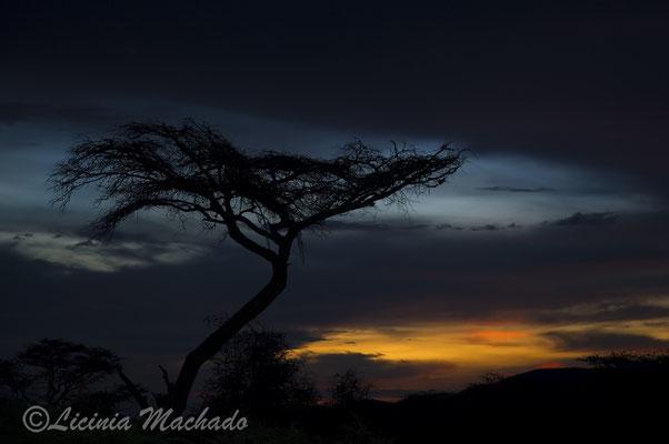 Tanzania #1