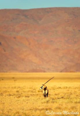Oryx #1