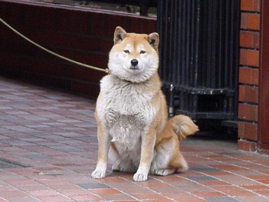 2000/03/19 ゴロー、天王町商店街