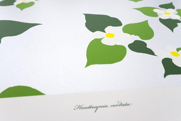 『unforgettable thing #1 Houttuynia cordata(ドクダミの花)』