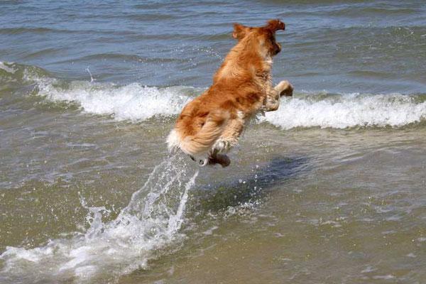 ...mit viel Speed in die Ostsee