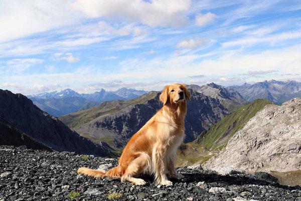 Jule auf dem Weißfluhjoch (2.693 m ü. M.)