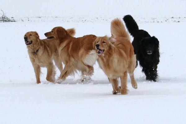 Lycka, Jule, Ostara und Joy (von links nach rechts)