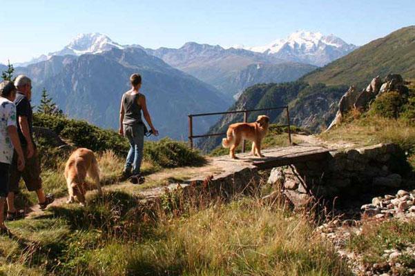 In der Nähe vom Aletschgletscher in den Walliser Alpen, 2.130 m.ü.M.; eine wunderschöne Gegend mit vielen Murmeltieren