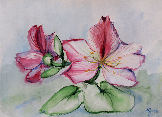 Bauhinia. Watercolor, paper, 16x23cm, 03-2011. Sold!