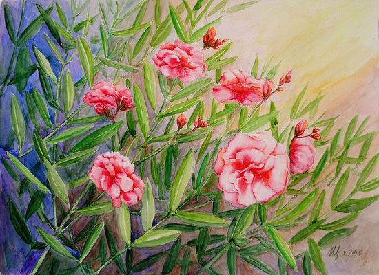 Oleander. Watercolor. 30[40 cm. 05-2010.