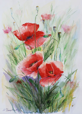Poppies, Watercolor on paper, 30x40cm, 2015