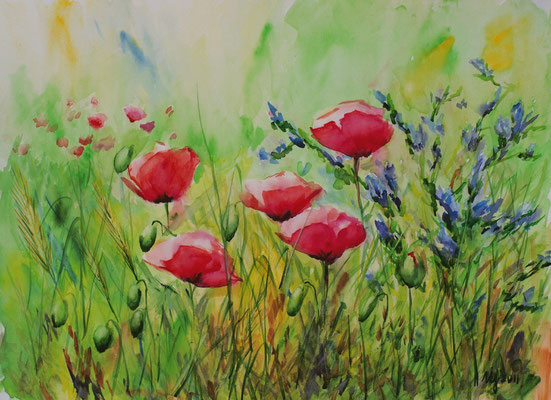 Summer poppies.Watercolor, paper canson, 29x42cm, 16-06-11. In a private collection