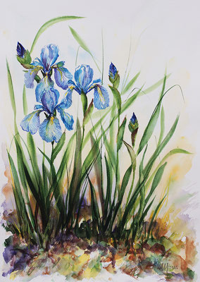 Iris #3. Watercolor, 30x40cm. 2015 sold!