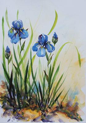 Iris #2. Watercolor, 30x40cm. 2015
