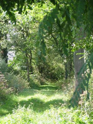 Sentier du Tacot - Randonnée à Sorbier (03220)