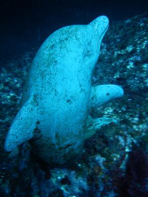 la statuetta del delfino all'ingresso della grotta