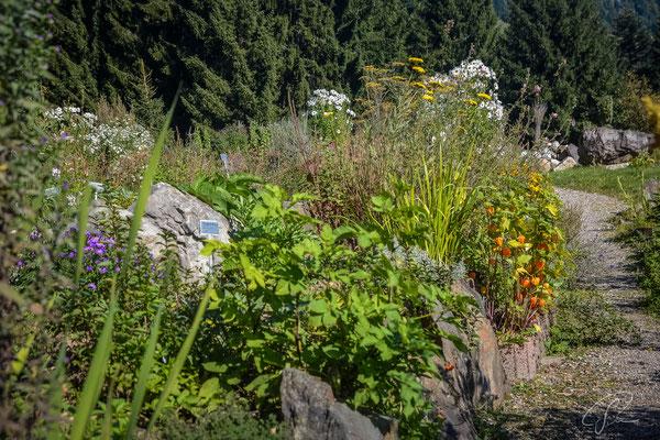 Blumengarten am Hoernlepass