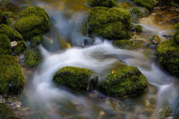 Schwarzwasser