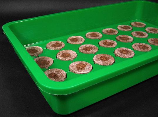 Torfquelltöpfe trocken Tablette im Minigewächshaus