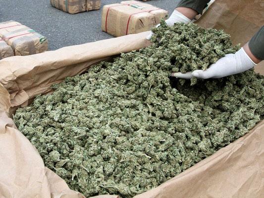 Marihuana im großen Sack
