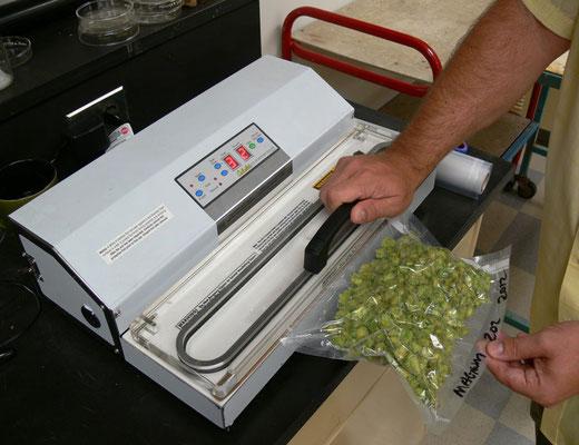 Marihuana in Vakuum verpackt