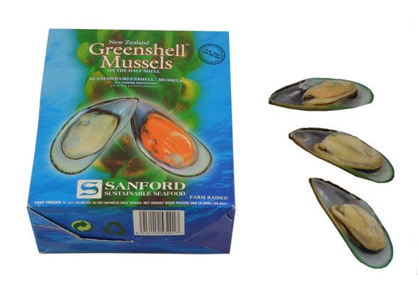 Muscheln Miesmuschel Green Shell Moussel