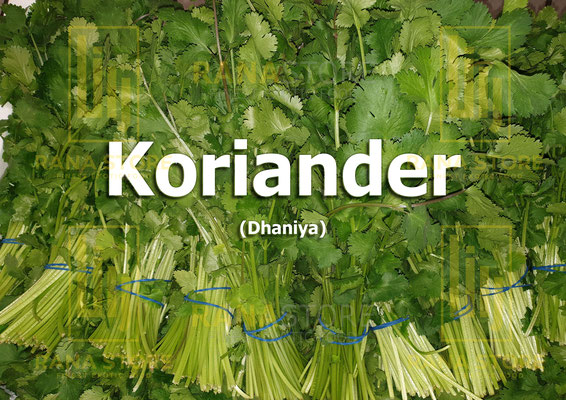 Koriander /Dhaniya)
