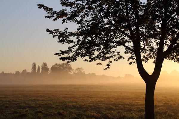 Morgennebel an der Saale