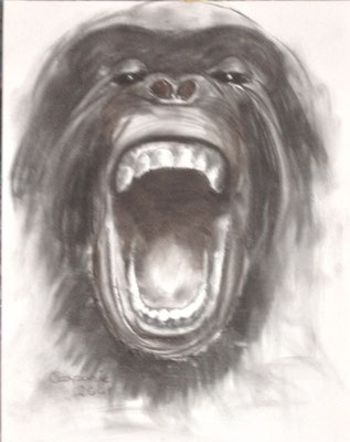 Gorilla, Houtskool op papier, A1 formaat, 75,00 euro