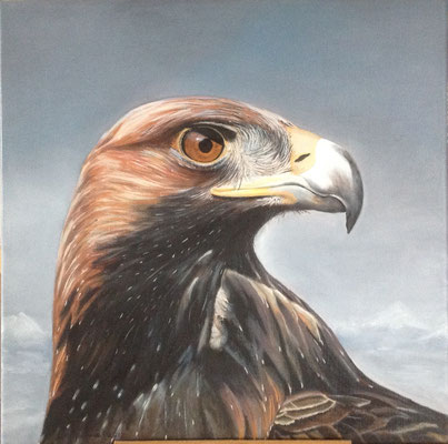 Golden Eagle, olieverf op linnen, 50 x 50 cm., 375,00 euro